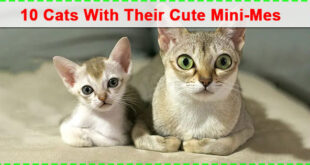 Best 10 Photos of Cats With Their Cute Mini-Mes